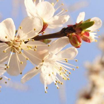 Volop voorjaar!