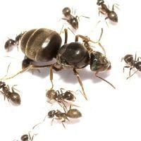 Mieren en kroketten