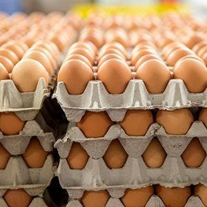 Schiedammers, kijk even uw eieren na 2