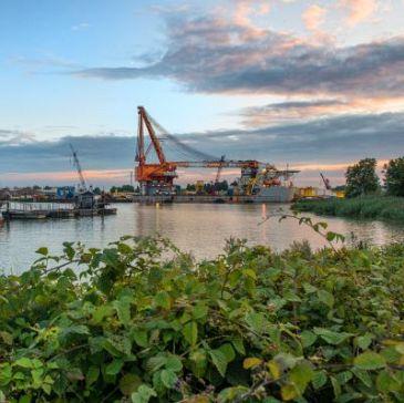 Wilhelminahaven krijgt natuuroever