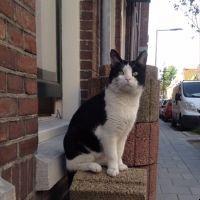 Jaimie is op zoek naar kat Dicky