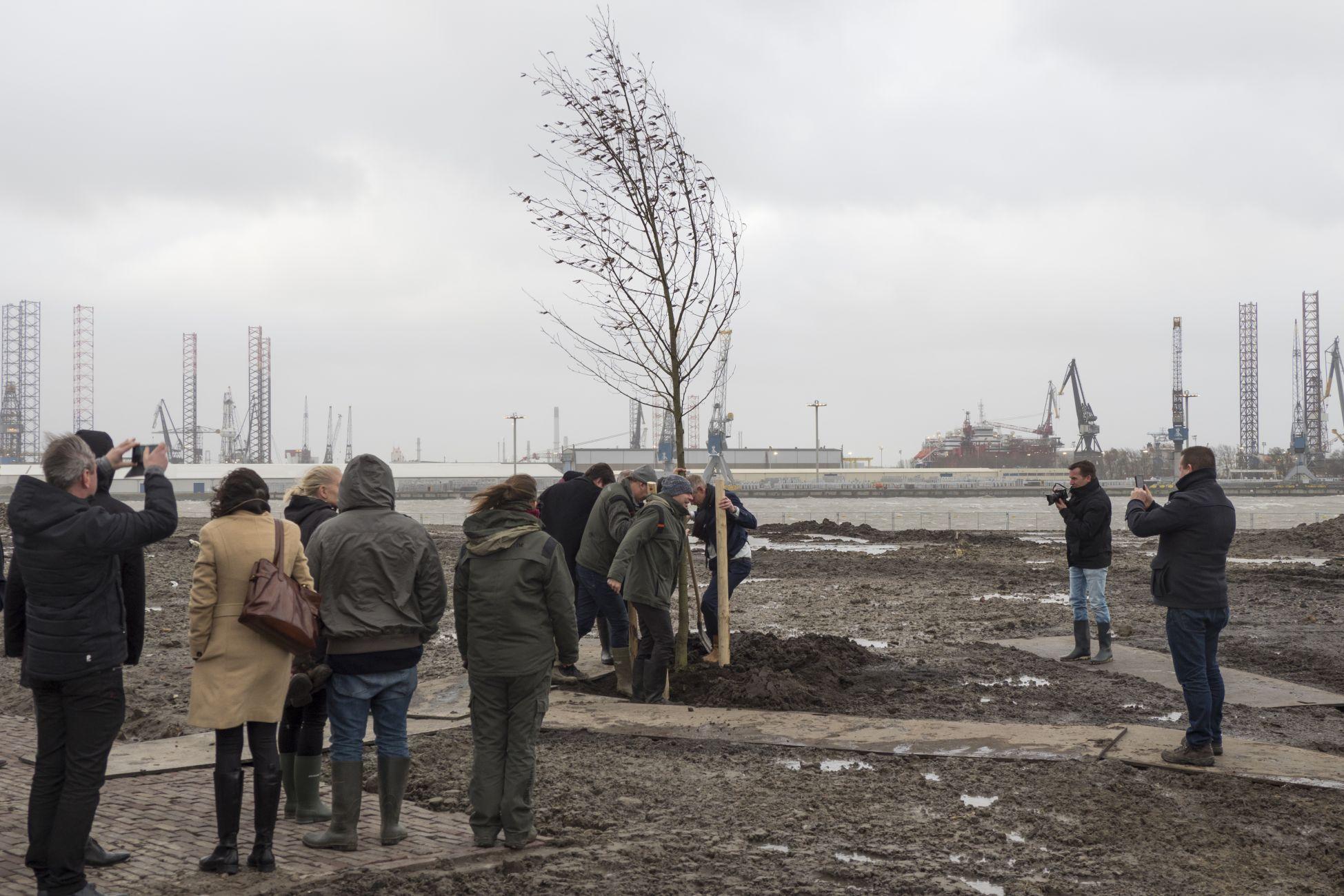 Eerste boom nieuw Oeverbos geplant