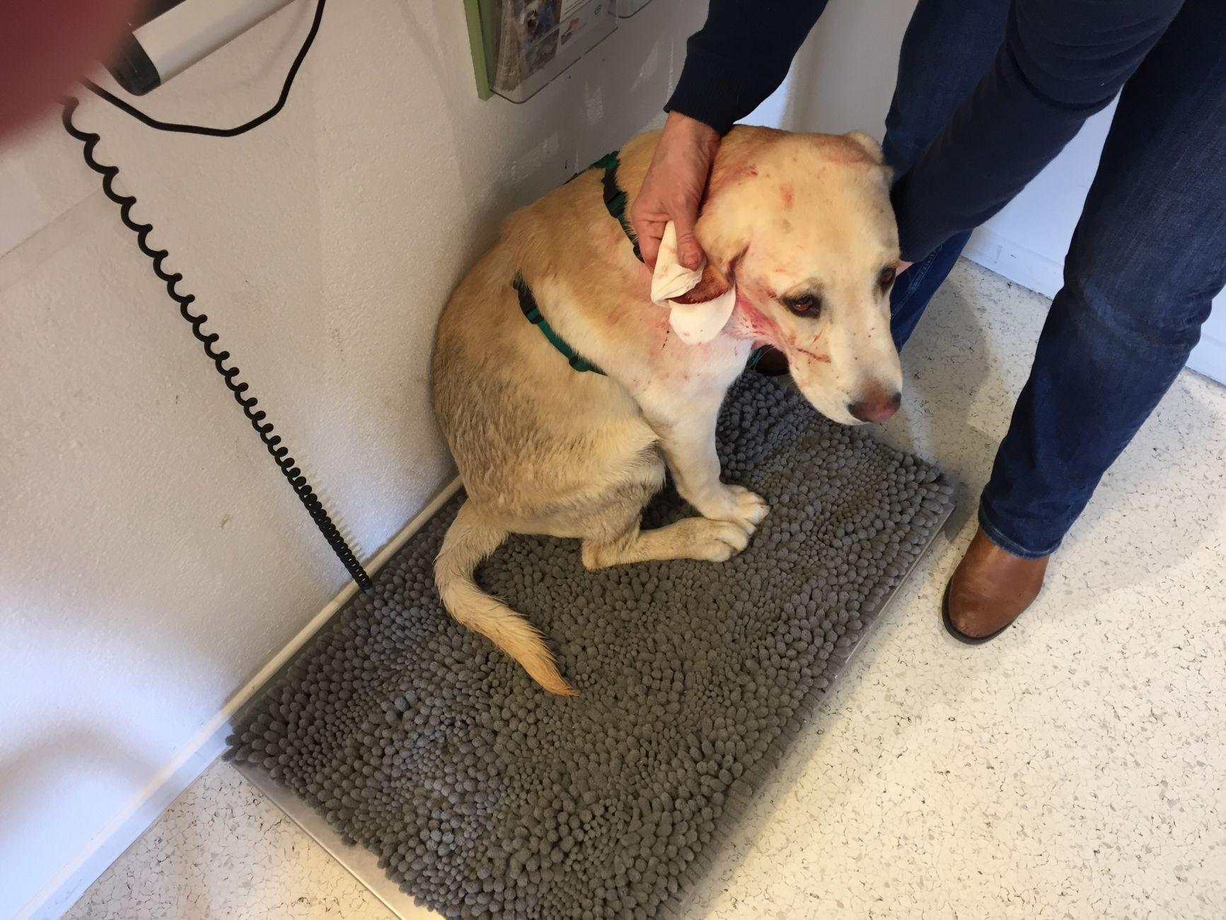 Gebeten hond: eigenaar zoekt ander baasje