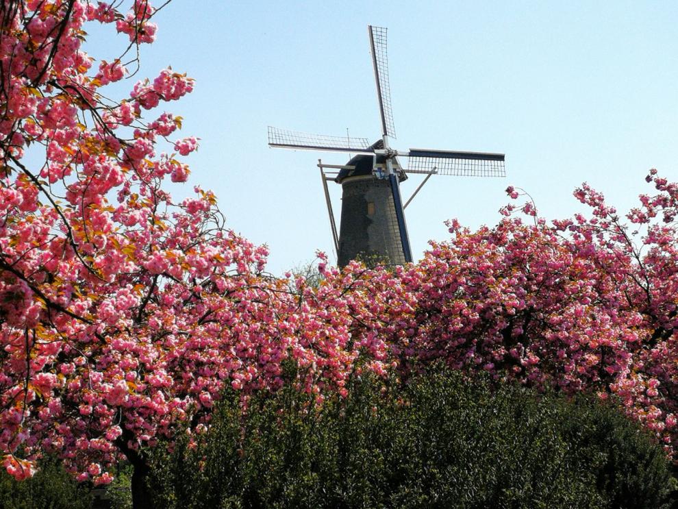 Voorjaar in molen Aeolus