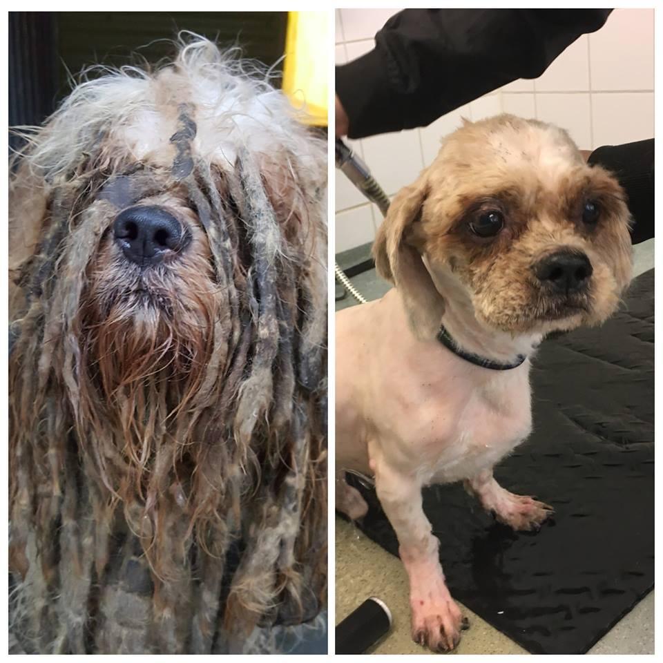 Bob: Zwaar verwaarloosd hondje opgevangen in Vlaardingen