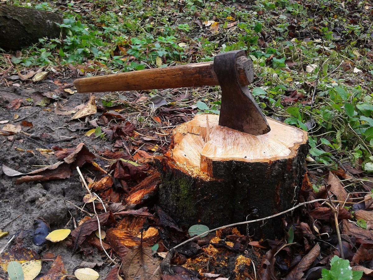 Grootschalig kappen bomen Maasboulevard gaat door