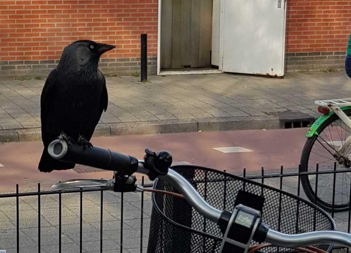 Nieuwe bewaker bij fietsenstalling
