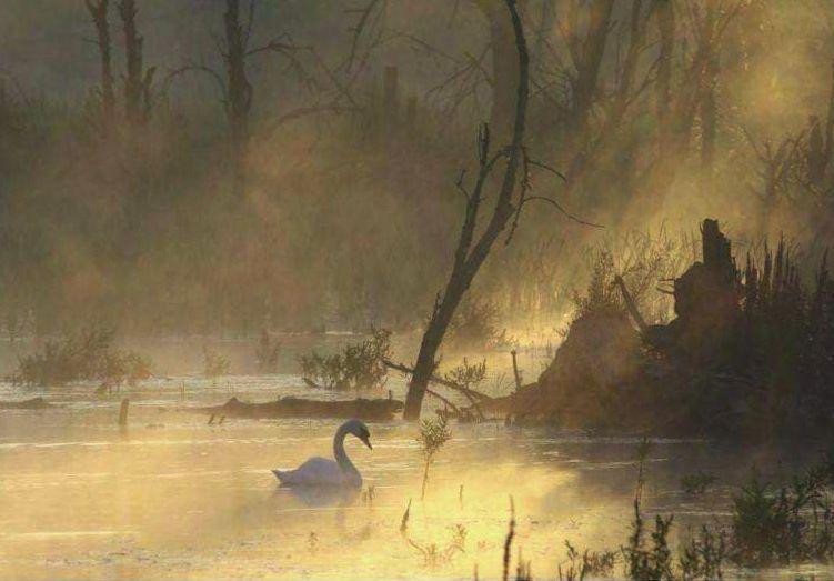 Foto Paul Meuldijk in boek Wereld Natuur Fonds