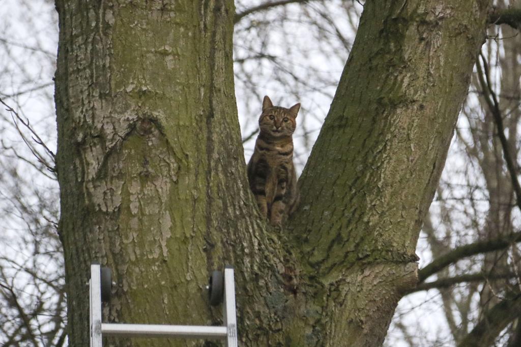 Vermiste kat na dagen gevonden