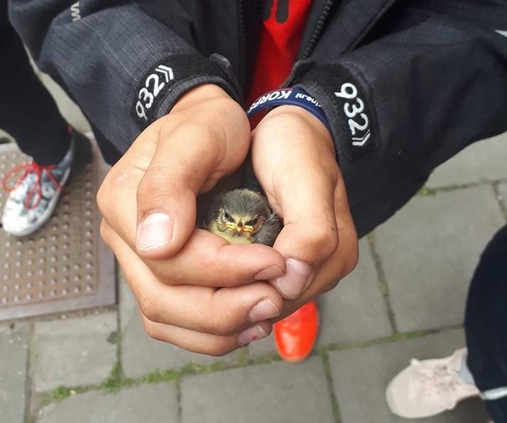Kinderen redden samen met politie jong vogeltje