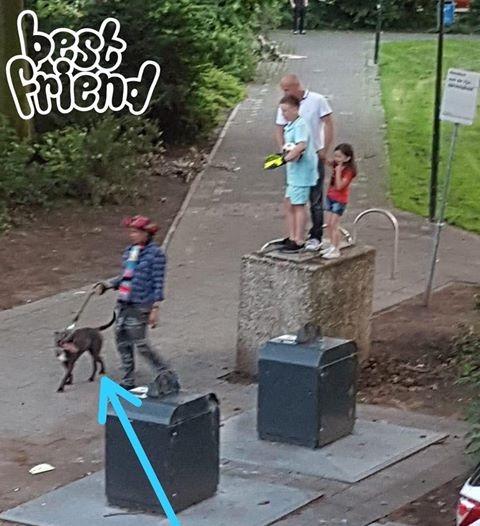 Politie neemt valse pitbull in beslag