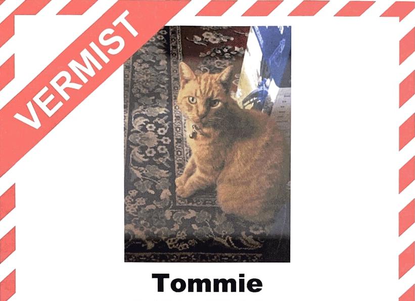 Wie heeft Tommie gezien?