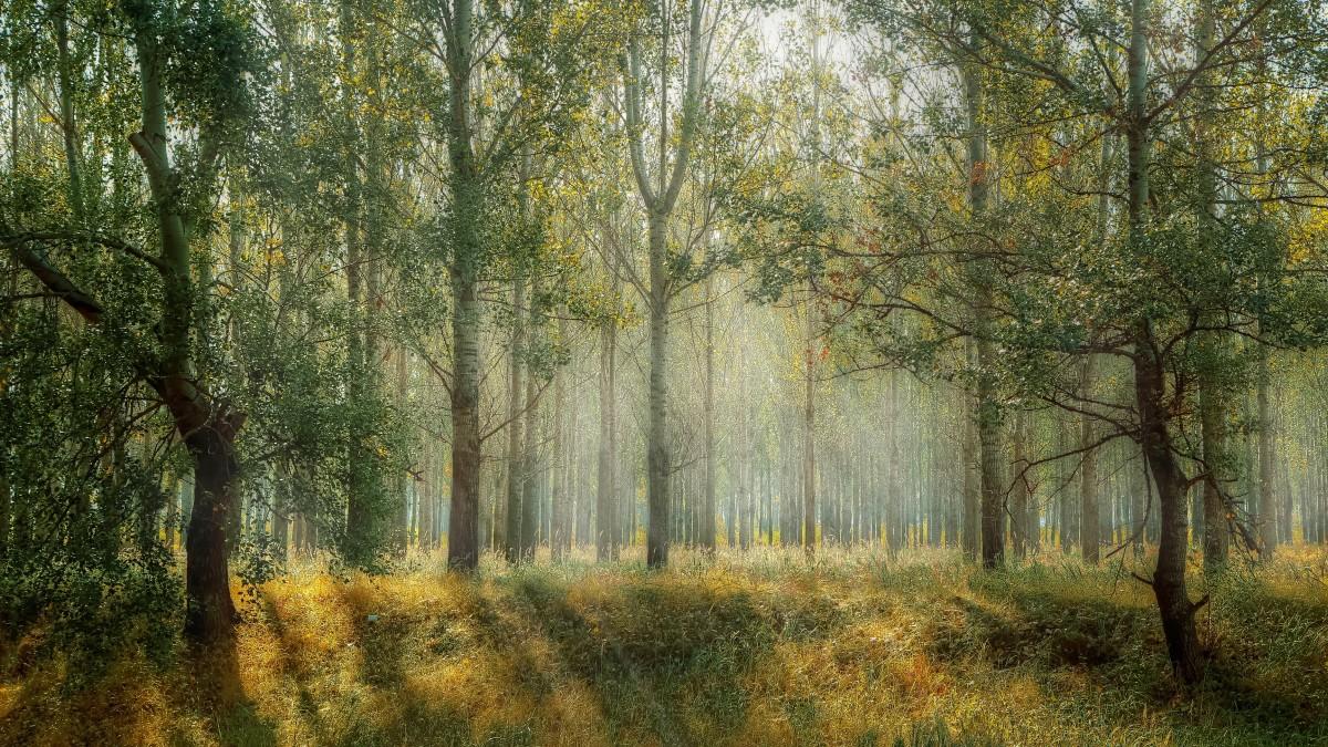 'Geef Vlaardingen een Herinneringenbos'