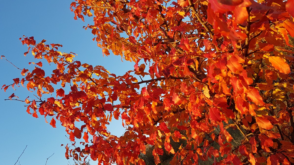 Vandaag wordt het herfst