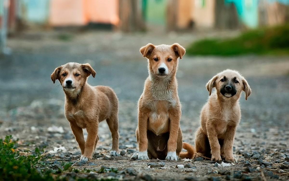 Fractie Boers wil af van de hondenbelasting