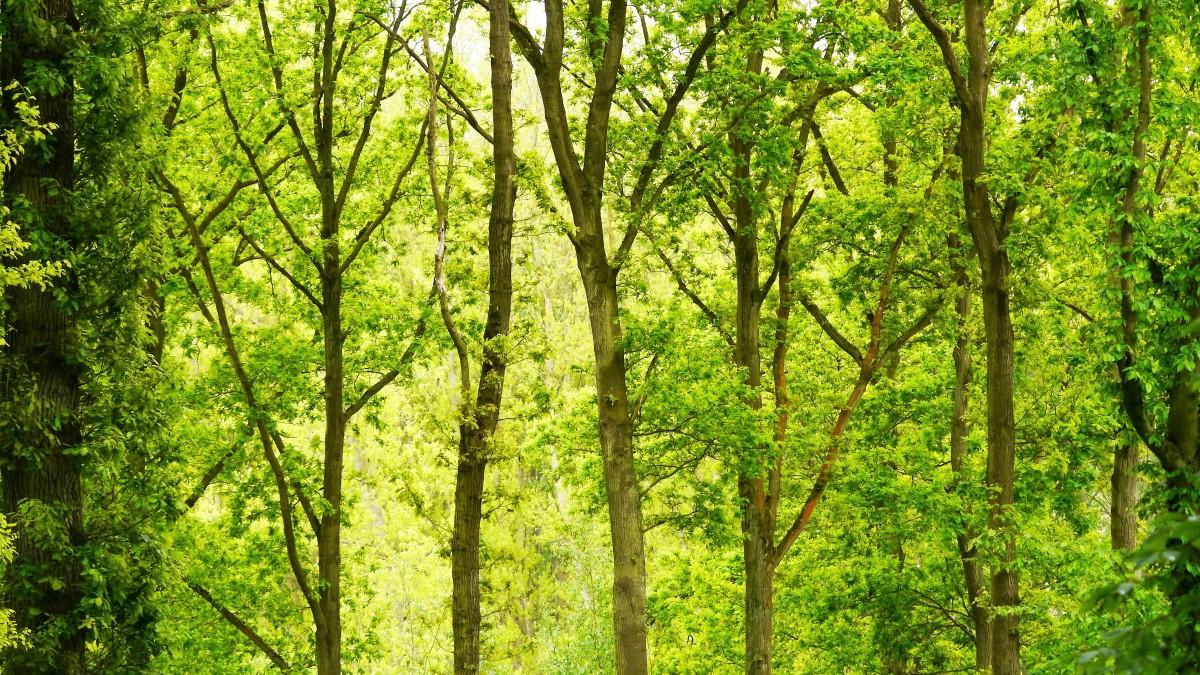 Raad wil groei van aantal bomen