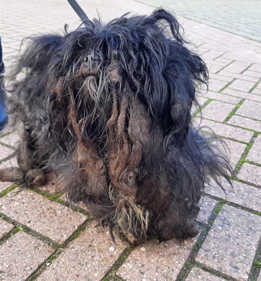 Getuigen gezocht van verwaarlozing honden