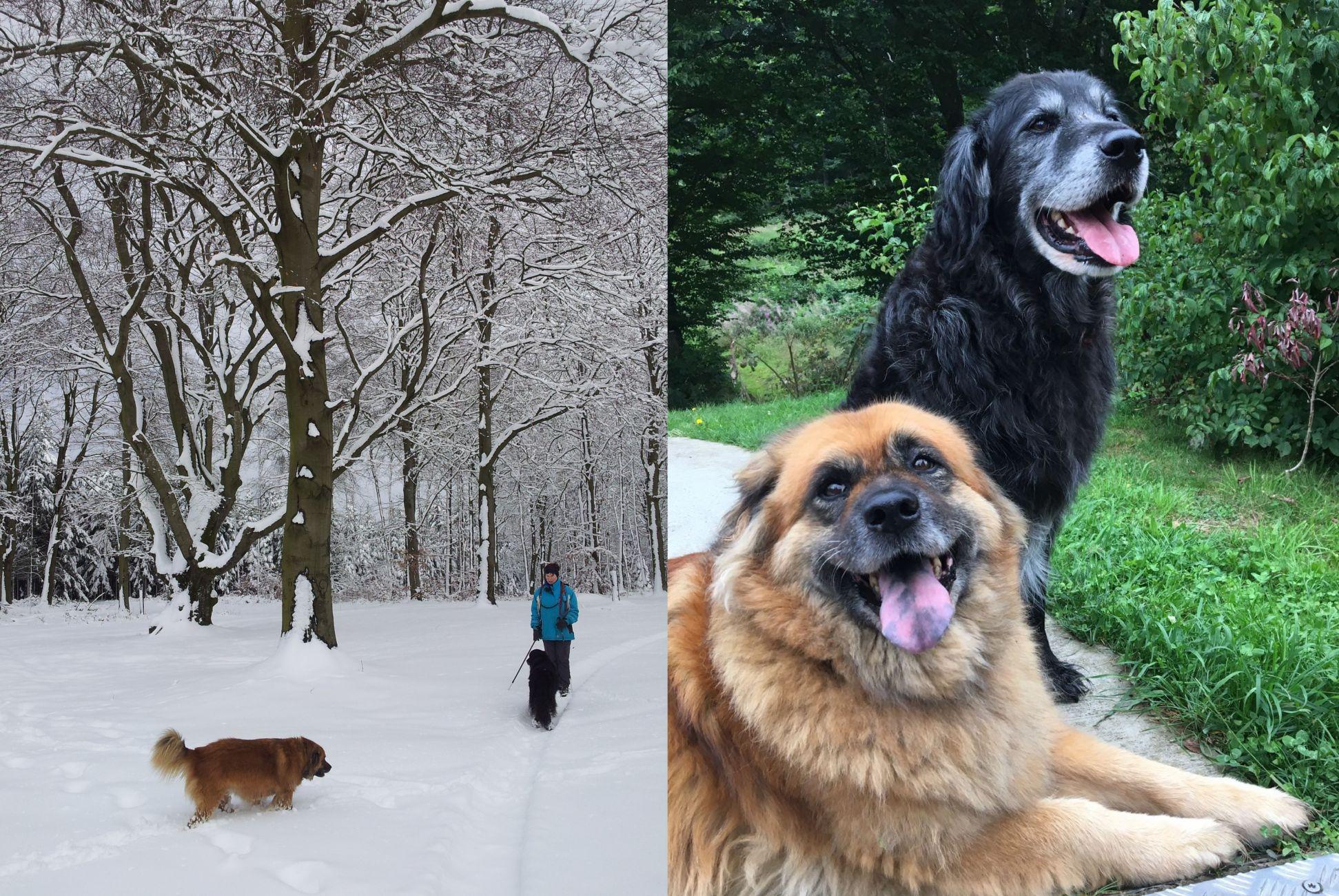 Een lange, vredige winterslaap