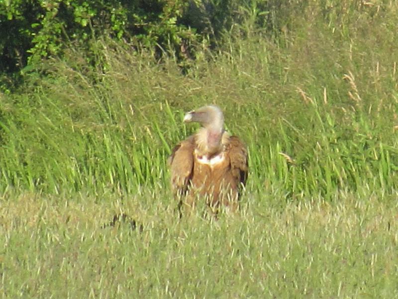 Vale gieren op de Zuidbuurt