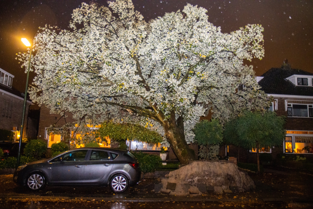 Bomen Prins Bernhardlaan ondergaan 'Biggenproef'