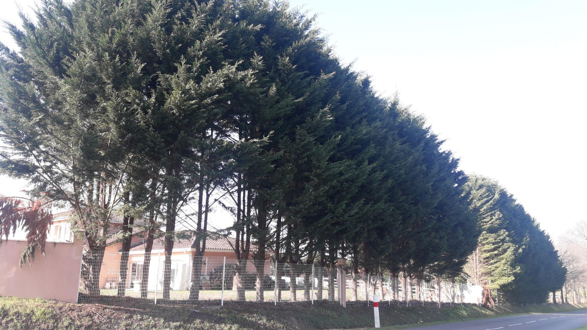 Een explosie van coniferen