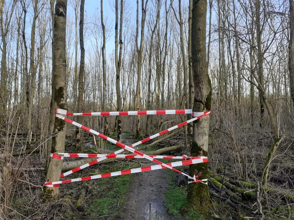 Staatsbosbeheer verwijdert zieke essen uit Broekpolder