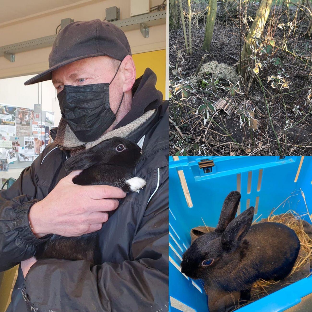 Ook tweede gedumpte konijn Broekpolder gered