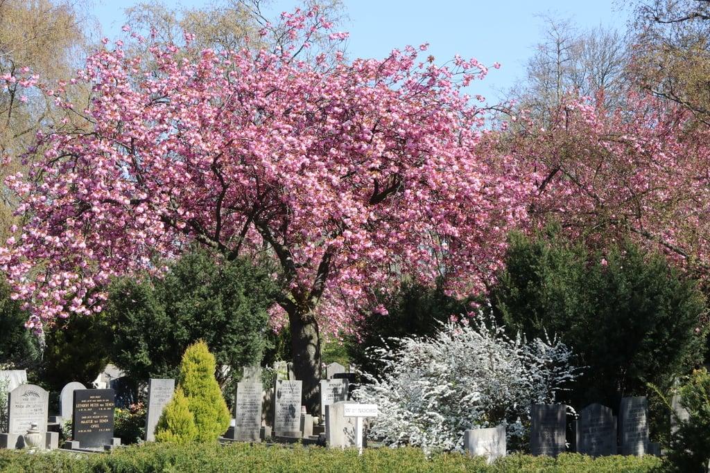 HVV zoekt foto's van grafmonumenten begraafplaatsen Emaus en Holy