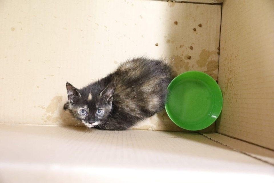 Poes met kittens gevonden in vuilcontainer