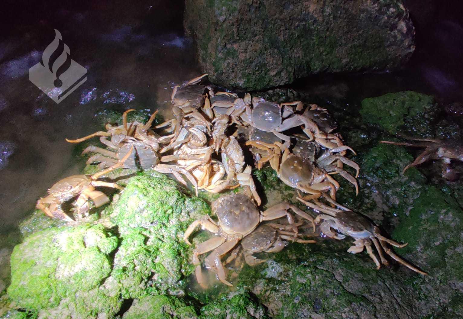 Twee krabbevangers op heterdaad betrapt