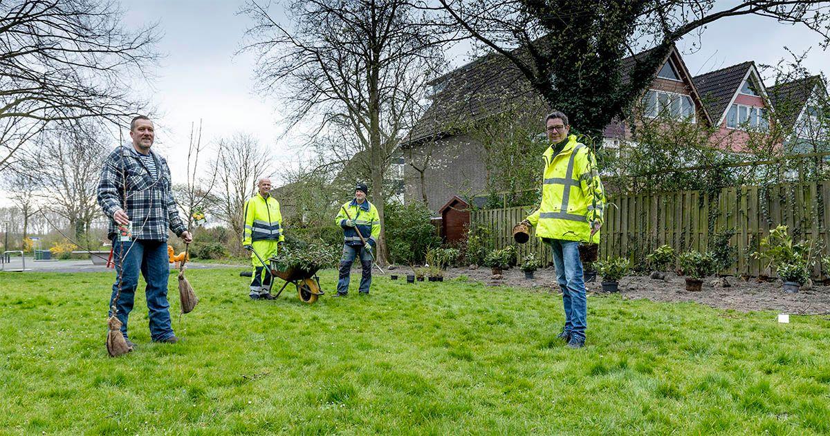 Nieuwe struiken en bomen in een openbare groenstrook