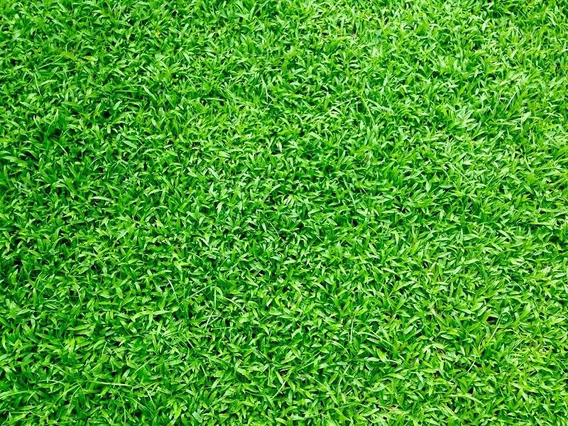 Informatieavond groen dak