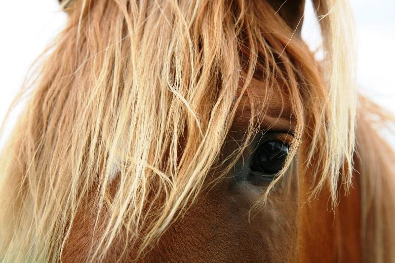 Zes basisscholieren maken kennis met paardrijden