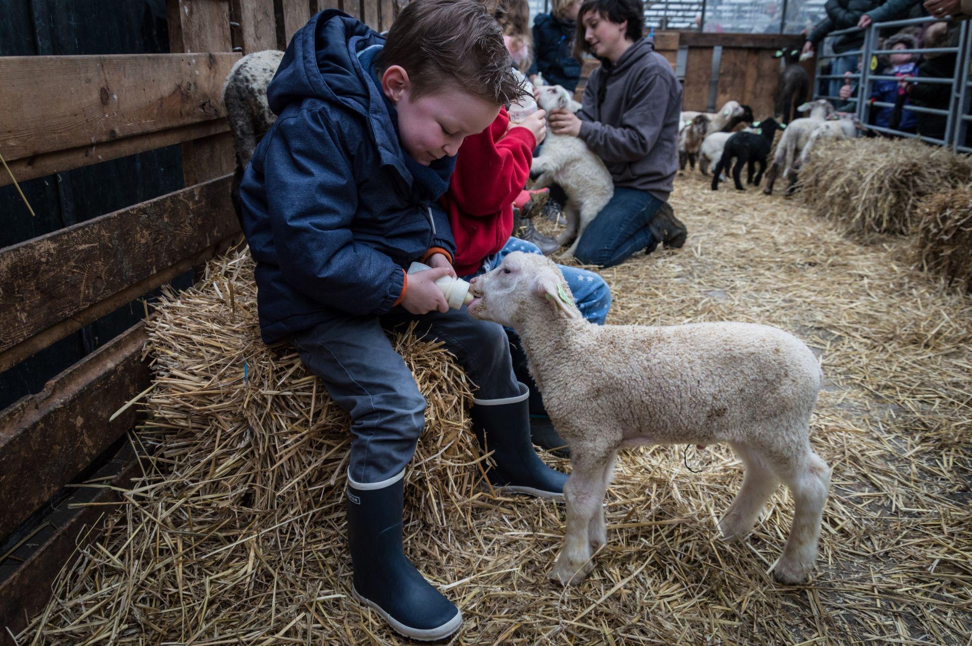 Lammetjes op de belevenisboerderij