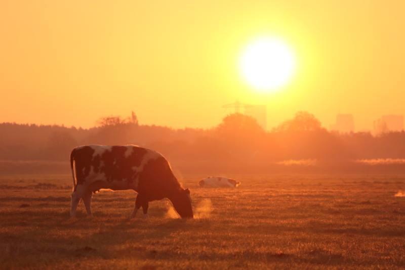 Omgevingsfonds Midden-Delfland stopt