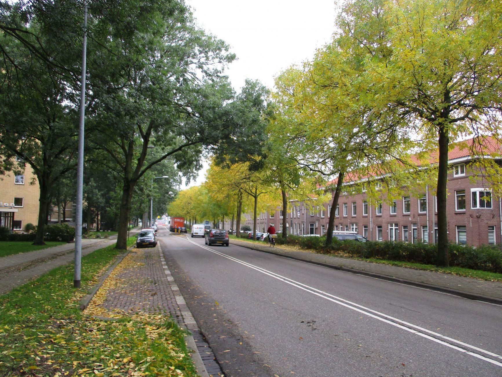 Vergunning bomenkap op weg naar herinrichting Havendijk