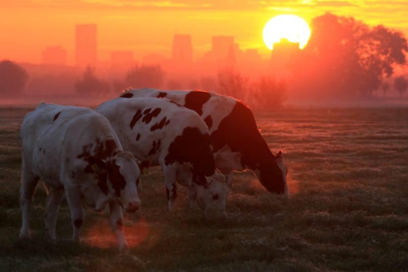 Schiedamse boeren en subsidie