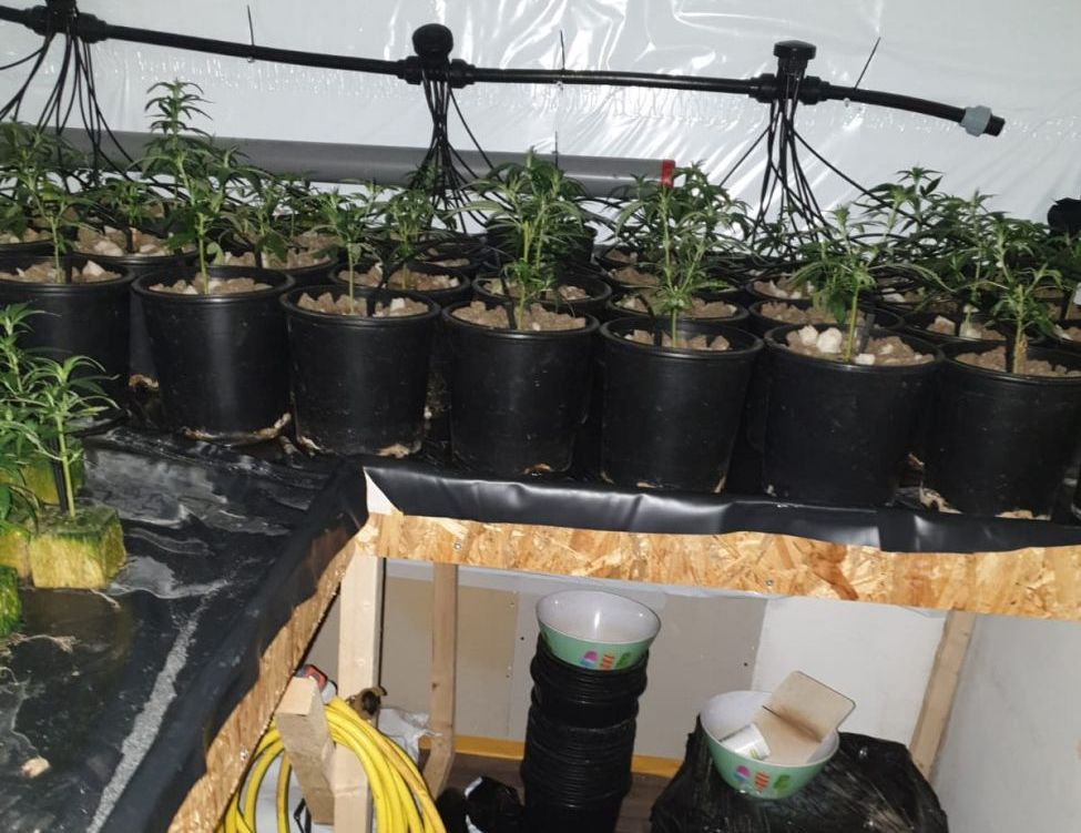 Wietplantage in Sveaparken