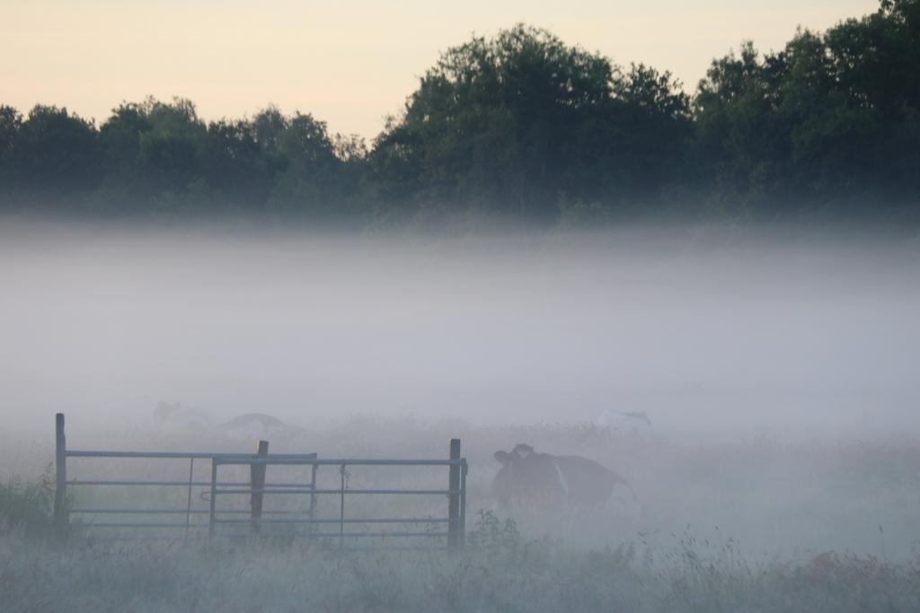 Staatsbosbeheer gaat blessen en dunnen in noord