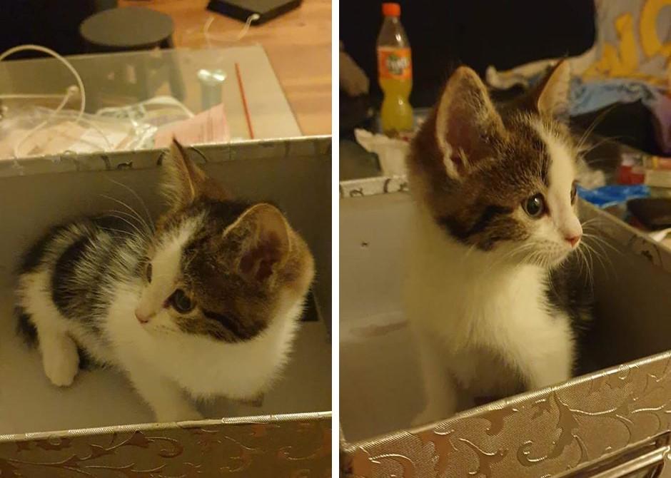 Kitten met drie pootjes vermist