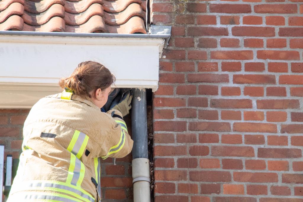 Zwaluw zit vast aan regenpijp in Van Beverenstraat