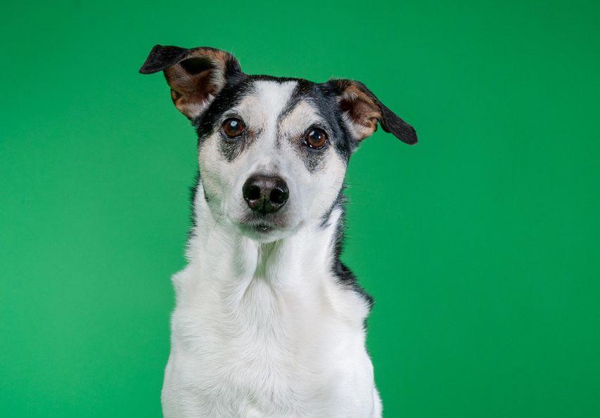 Honden uit west gezocht voor foto- en verhalenproject