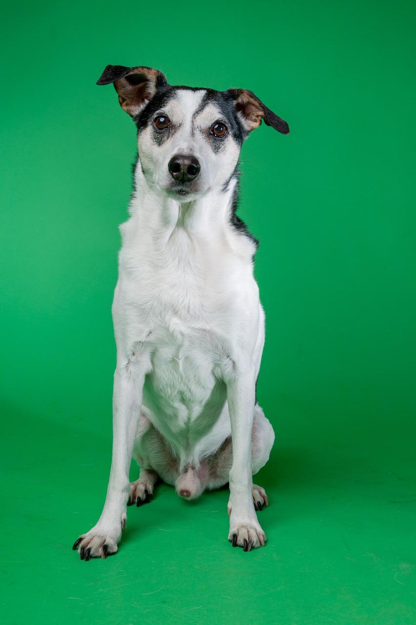 Honden uit Schiedam-West gezocht voor foto- en verhalenproject