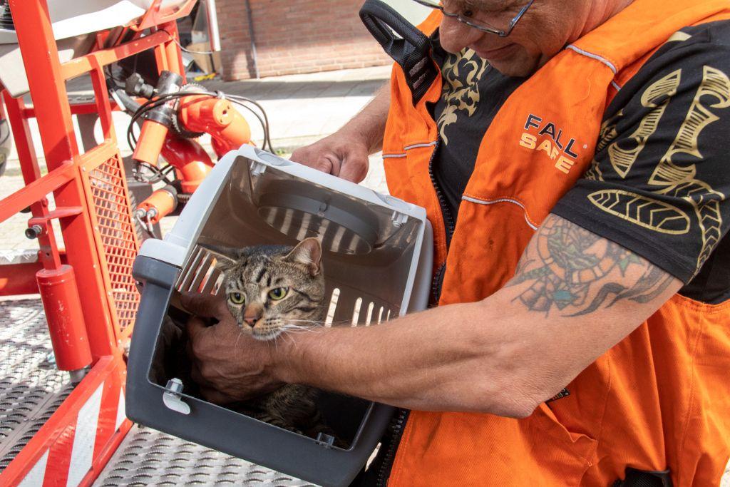 Schiedam24 • Brandweer herenigt kat met baasje • #Schiedam.