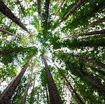 375 bomen vanwege Blankenburgverbinding