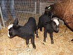 Zutphense kinderboerderij krijgt bijval van de gemeente