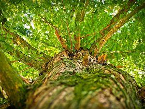Wilt u meer of minder bomen?