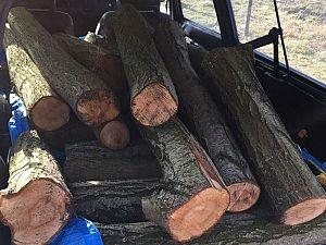 Diefstal hout uit Broekpolder verijdeld