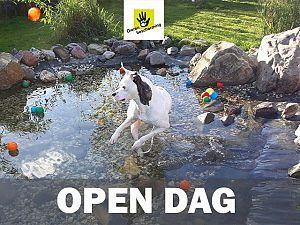 Open Dag dierenopvangcentrum Vlaardingen