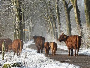 Themawandeling: op zoek naar de grote grazers